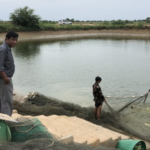 JAPANESE FIRM TO CONDUCT STUDY ON INVESTMENT IN AQUACULTURE INDUSTRY IN CAMBODIA