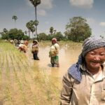 AUSTRALIAN FIRM KEEN TO INVEST IN CAMBODIA'S PADDY RICE AND MILLED RICE PRODUCTION CHAIN FOR EXPORT TO AUSTRALIA